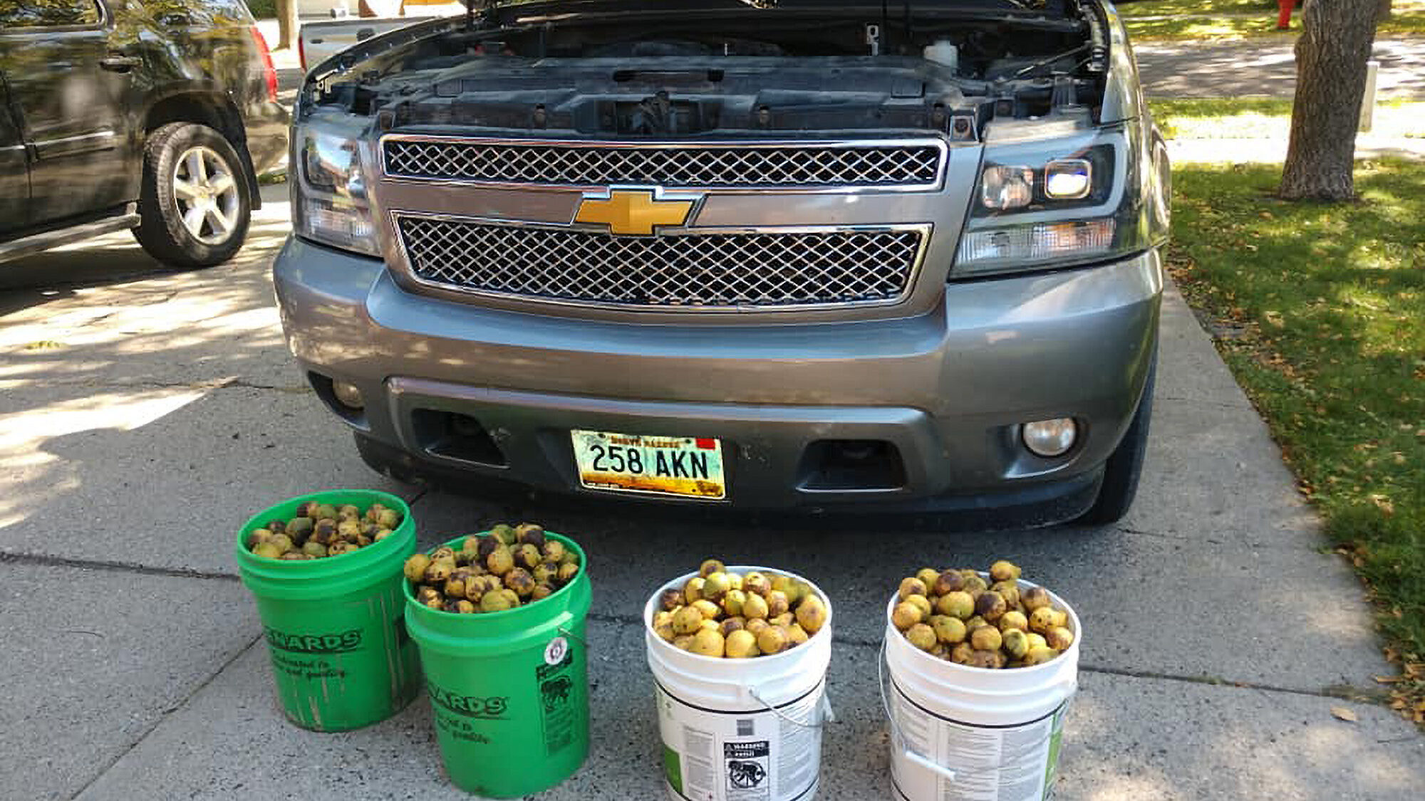 VIDEO: Nuts! Screwy Squirrel Stashes Nearly 350 Pounds Of Walnuts In A Truck