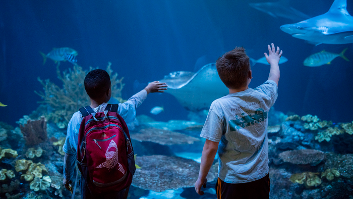 Millions Of Microscopic Thieves Steal Essential Medicine From World-Famous Shedd Aquarium