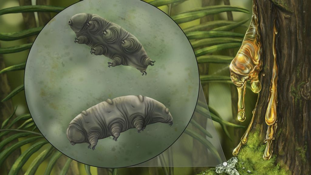 Grade Expectations: New Species Of Tiny Tardigrade Found Embedded In 16-Million-Year-Old Amber