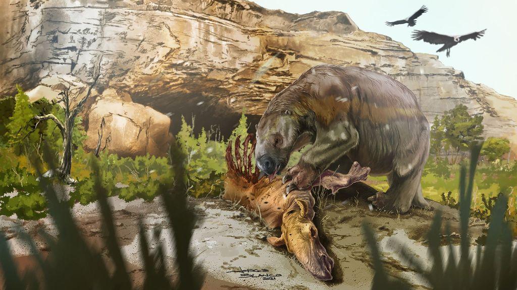 Elephant-Sized Prehistoric Sloth Was A Meat Eater, Unlike Veggie Descendants