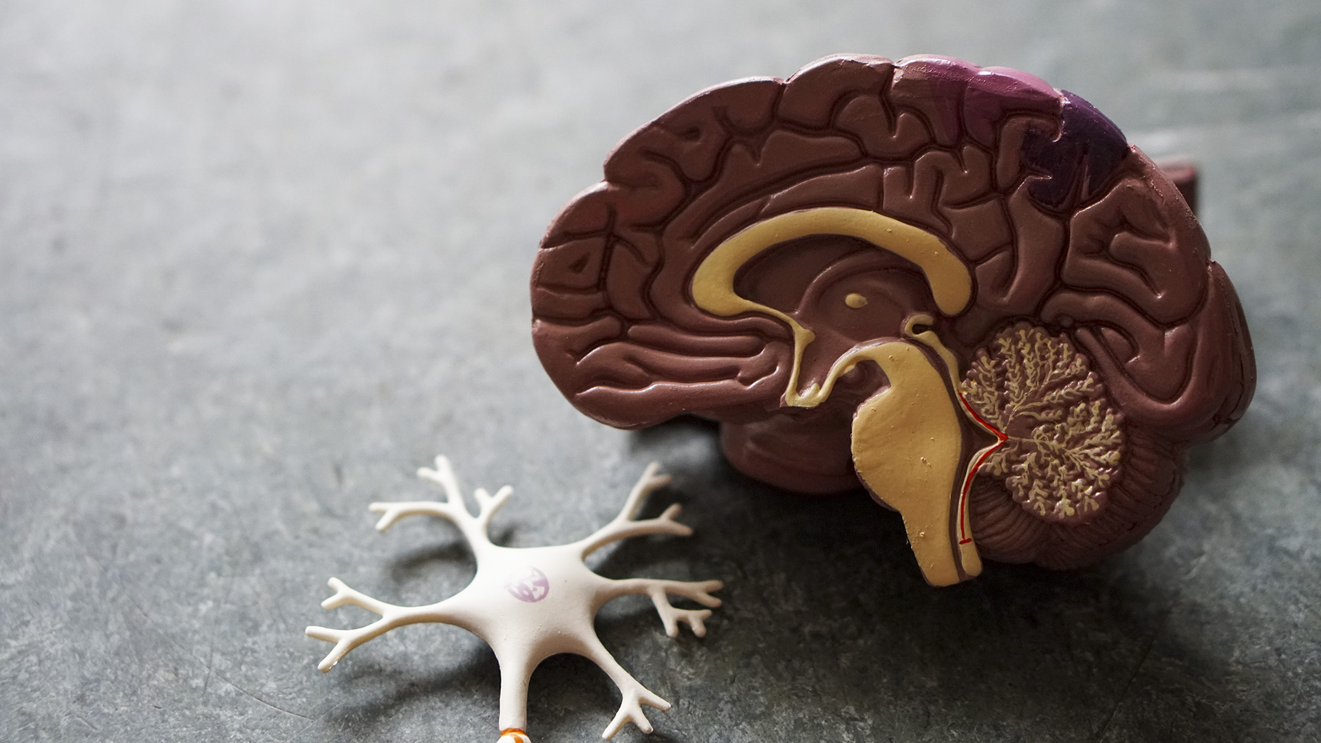 Neuroscientists Roll Out First Comprehensive Atlas Of Brain Cells