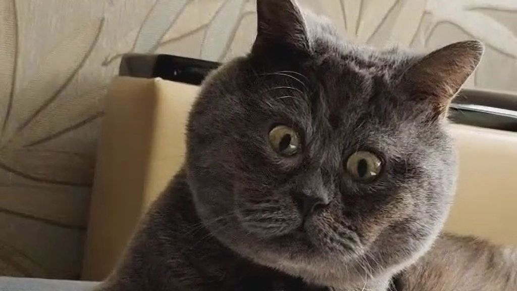 VIDEO: Scaredy Cat: Puss's Permanently Startled Expression Wins Over An Army Of Online Fans