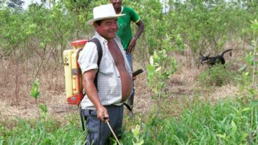 Un granjero cuida su cultivo de coca en esta imagen de 2001. El gobierno colombiano busca soluciones viables contra la producción de drogas en el país. Las estrategias implementadas hasta ahora, en conjunto con Estados Unidos, no han dado resultados y han provocado problemas de salud y ambientales. (Carlos Villalon/Getty Images)