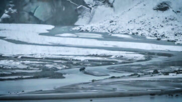 A brown bear, filmed from a cruise ship, walks in front of Lamplugh Glacier in Glacier Bay National Park and Preserve in Alaska on Oct. 12, apparently looking for a good place to hibernate. (Glacier Bay National Park/Zenger)