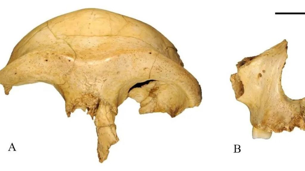 Face First: World's 'Oldest Modern Human' Restored To Reveal Face