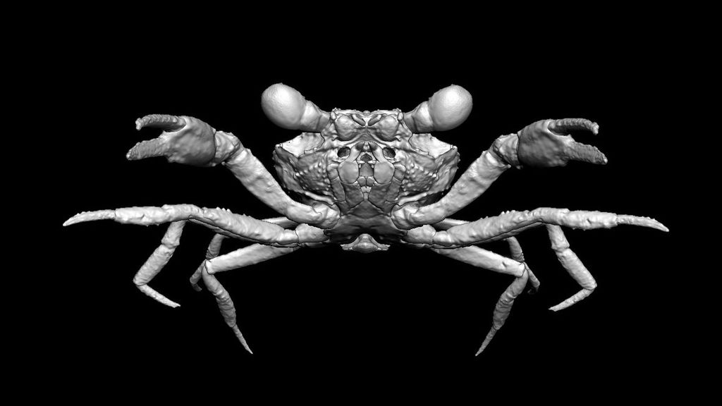 VIDEO: World's Oldest  Crab Nips Out After 100 Million Years Trapped In Amber